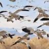 Video: Palästinenser schmuggelt in seiner Hose Singvögel nach Israel