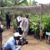 Trilaterale Kooperation in Kamerun: Mit Maya, Tommy und Keitt gegen die Armut der Mangobauern