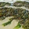 Israelische Wissenschaftler stellen Plastik aus Mikroorganismen her die sich von Algen ernähren