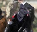 Araber griffen in Jaffa Feuerwehr und Polizei an
